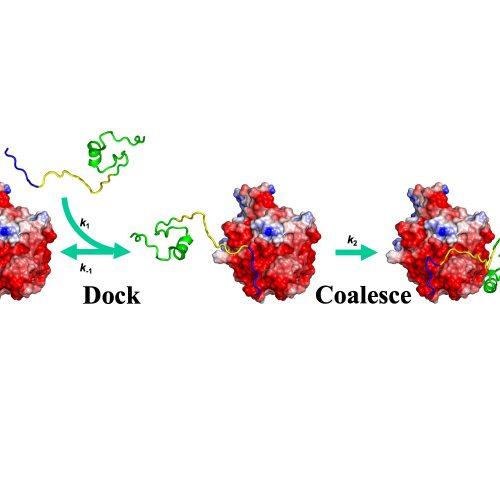 WASP-Cdc42 binding